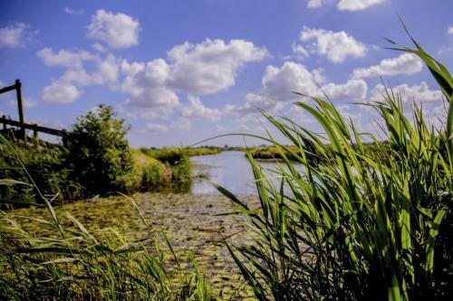 ringvaart wogmeer (Medium)
