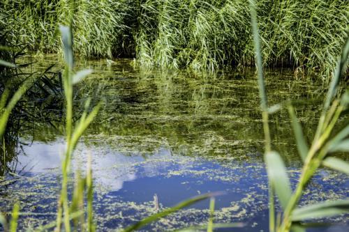 spiegeling water (Medium)